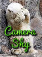 Camery Shy